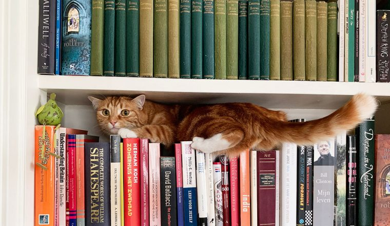 Cat in a bookcase Michel Porro - Unsplash